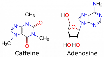 1280px-caffeine_and_adenosine-svg