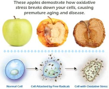stress-ossidativo-cellule