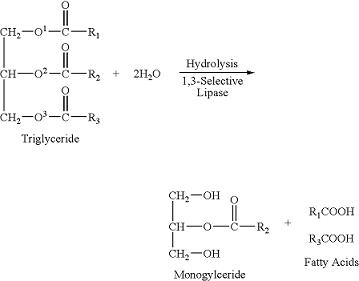 enzima lipasi