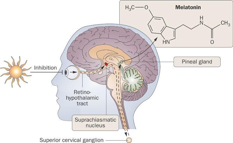 melatonina e tumore prostata